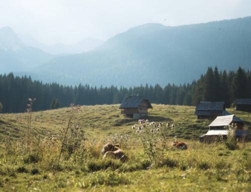 El auge del turismo rural